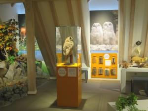 """Referenz: Familienmuseum Naturkunde """"Wald - Land - Fluss"""" im Museum im Ritterhaus Offenburg"""